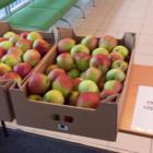 OSiR Włochy zaprasza na jabłka
