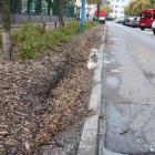 Ochrona zieleni ulicy Radomskiej